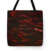 Koi Fish In China Tote Bag