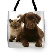 Labrador Pup And Birman-cross Kitten Tote Bag