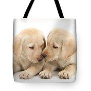 Labrador Retriever Puppies Tote Bag