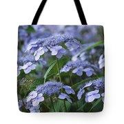 Lace Cap Hydrangeas In Bloom Tote Bag