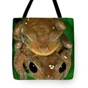 Lacelid Frog Nyctimystes Dayi Pair Tote Bag
