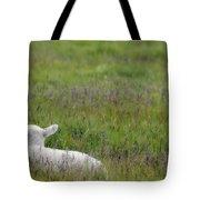 Lamb In Pasture, Alberta, Canada Tote Bag