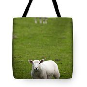 Lambs In A Field Tote Bag
