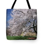 landscape 3 Sprawling Apple Tree in Spring Tote Bag