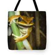 Large Arboreal Hylid Frog Tote Bag