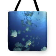Large School Of Batfish, Christmas Tote Bag