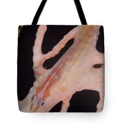Large Whip Goby On Sea Fan, Papua New Tote Bag by Steve Jones