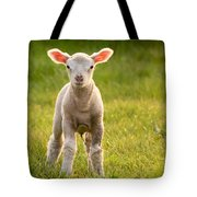 Larry Lamb And His Lovely Pink Ears. Tote Bag