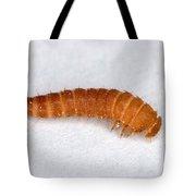 Larva Of Black Carpet Beetle Tote Bag