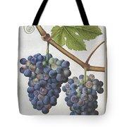 Le Moyne: Grape Vine, C1585 Tote Bag
