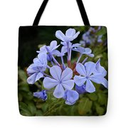 Leadwort Tote Bag