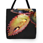 Leaf And Dew Drops Tote Bag