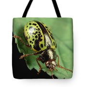 Leaf Beetle Calligrapha Sp Portrait Tote Bag