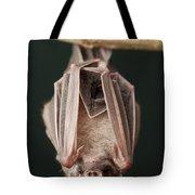 Leaf-nosed Bat Phyllostomidae, Amazon Tote Bag