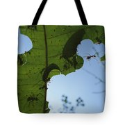 Leafcutter Ant Atta Columbica Workers Tote Bag