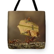 Leafcutter Ant Atta Sp Group Carrying Tote Bag