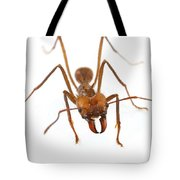 Leafcutter Ant Worker Costa Rica Tote Bag