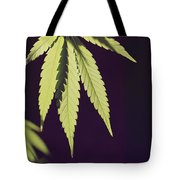Leaves Of A Marijuana Plant Cannabis Tote Bag