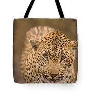 Leopard Panthera Pardus, Arathusa Tote Bag