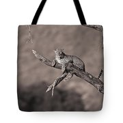 Leopard Panthera Pardus In A Tree Tote Bag