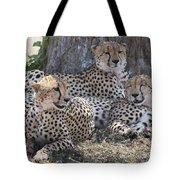 Leopards, Kenya, Africa Tote Bag