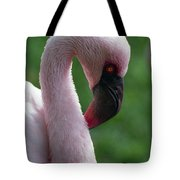 Lesser Flamingo Tote Bag
