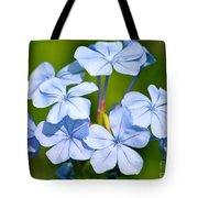 Light Blue Plumbago Flowers Tote Bag by Carol Groenen