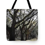 Light Through Live Oaks Tote Bag