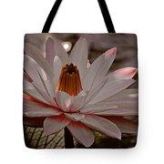 Lil Peachy Tote Bag