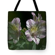 Lily - Liliaceae 3 Tote Bag
