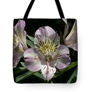 Lily - Liliaceae Tote Bag