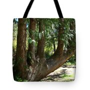 Limbs To Trees Tote Bag
