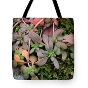 Lime Stonecrop  Leaves In Winter Tote Bag