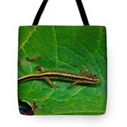 Lined Salamander 3 Tote Bag