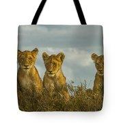 Lion Cubs Serengeti National Park Tote Bag