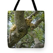 Lion Lookout Tote Bag