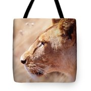 Lioness Staring Intently At Passing Tote Bag