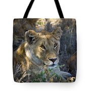 Lioness With Pride In Shade Tote Bag
