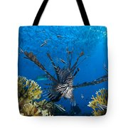 Lionfish Foraging Amongst Corals Tote Bag