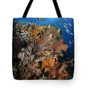 Lionfish, Indonesia Tote Bag