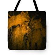 Lions At Night Tote Bag