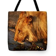 Lion's Pride Tote Bag