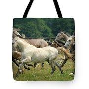 Lipizzan Horses Tote Bag
