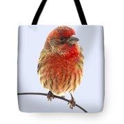 Little Beauty Male Finch I Tote Bag