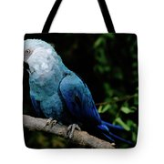 Little Blue Macaw Cyanopsitta Spixii Tote Bag