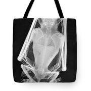 Little Brown Bat X-ray Tote Bag