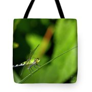 little Green wings Tote Bag