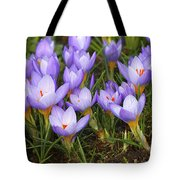 Little Purple Crocuses Tote Bag