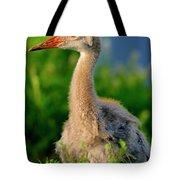 Little Sandhill Cranes Tote Bag