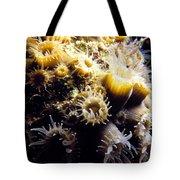 Live Coral Feeding At Night Tote Bag